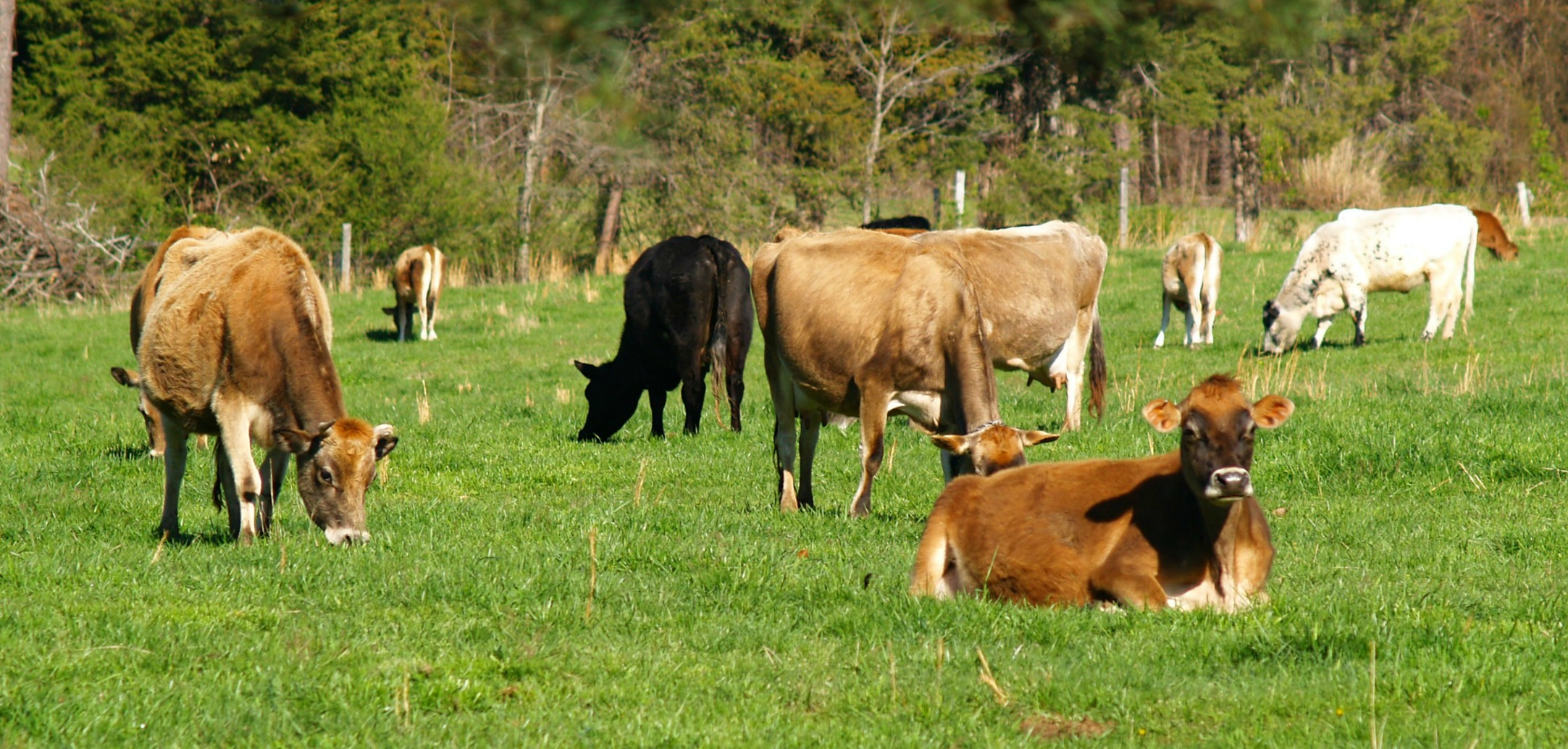 Raw Dairy