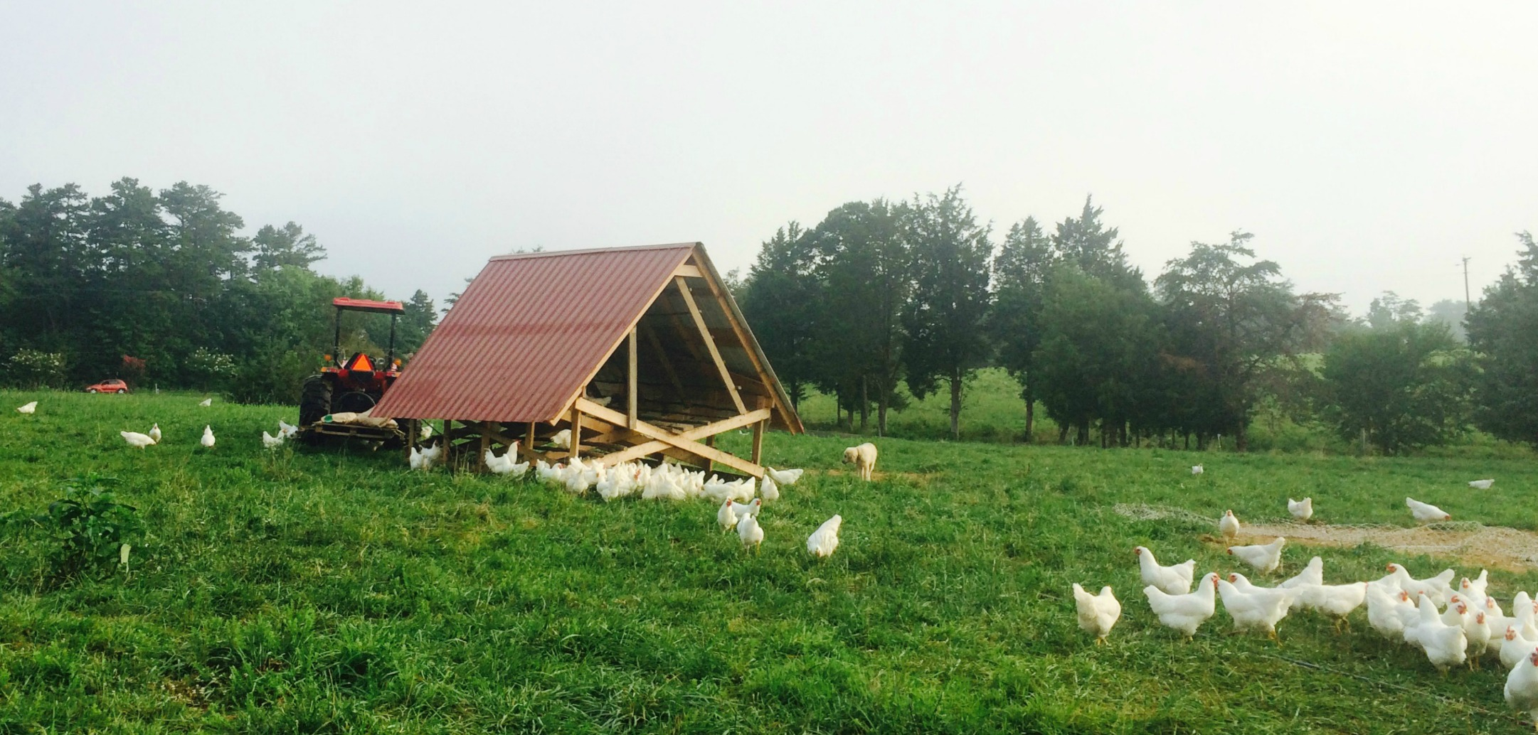 Pasture Raised Poultry & Eggs